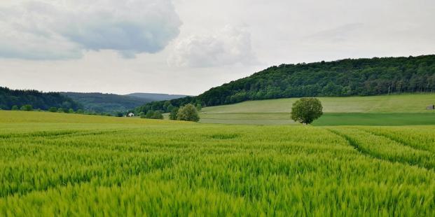 Auch der Weizen ist bereits aufgegangen