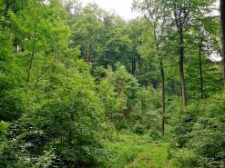 Im Asseler Wald