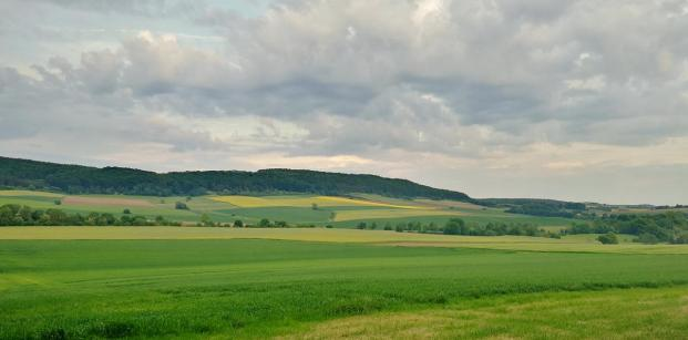 Im Hintergrund erhebt sich der Asseler Wald und darin die Quastholle
