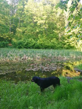Doxi an einem Weiher im Wald