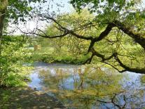Natürliches Wehr an der Möhne. Davor ist das aufgestaute Wasser ganz ruhig und spiegelglatt.