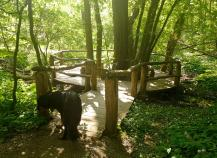 Aussichtspunkt an einem Bach im Wald
