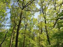 Frisch ergrünter Wald am See