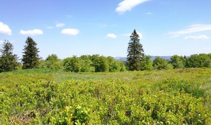 Heidelandschaft im Naturschutzgebiet auf dem Gipfel