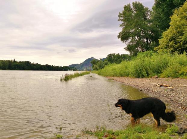 Doxi am Rheinufer zwischen Unkel und Bad Honnef. Im Hinterggrund der Petersberg