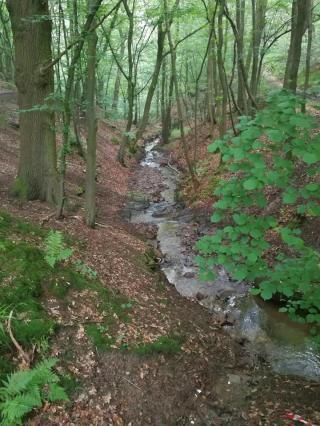 Der Ruisseau de Lovegné im Wald