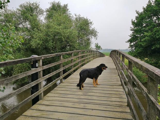 Fiedsbrug auf halber Strecke zwischen Sint Odilienberg und Melick