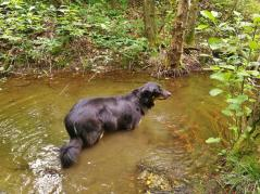 Doxi testet die Wasserqualität des Arsberger Sees