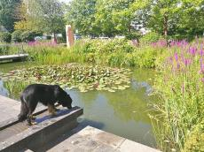 Doxi trinkt am Teich vor dem Rathaus