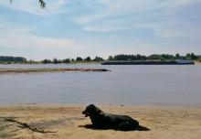 Doxi am Rhein mit Riesen-Stöckchen