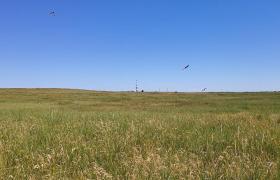 Blick in das Inselinnere. Hier brüten zahllose Vögel. Ihre Nester sind im Gras verstreut.
