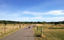 Weide- und Feldflächen oberhalb von Alfter