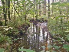 Beschaulich fließt die Inde durch den Wald