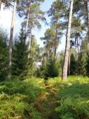Auf schmalen und dicht bewachsenen Pfaden geht es durch den Wald