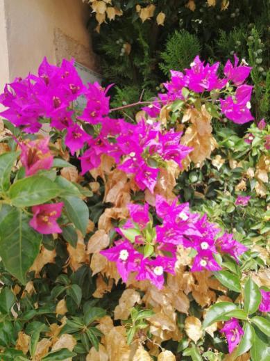 Blumen an einer Finca unterhalb des Bergs