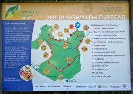 Infotafel am Burgberg-Lehrpfad