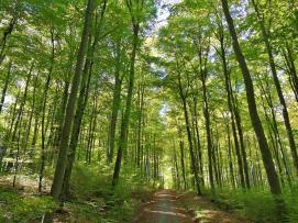 Im Wald zwischen Bad Camberg und Dombach