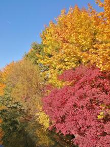 Herbstlich bunte Bäume am Wöhrder See