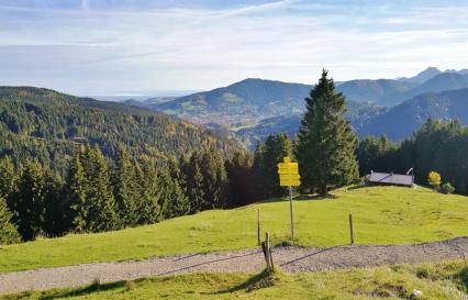 Kurz vor der Kreuzbergalm lichtet sich der Wald und gibt den Blick frei