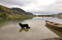 Doxi nimmt noch einmal einen kräftigen Schluck aus dem See