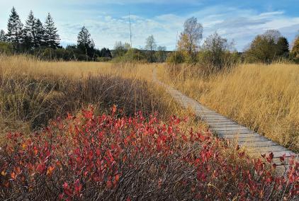 Auf schmalen Holzstegen geht es durch die feuchte Fennlandschaft