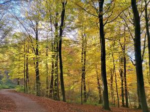 Die Farben des Herbsts