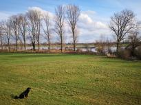 Wir nähern uns dem Rhein