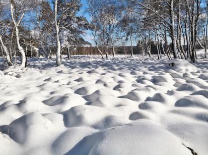 Venngras unter Schnee