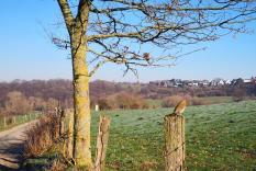 Kleiner Singvogel am Rande einer Weide