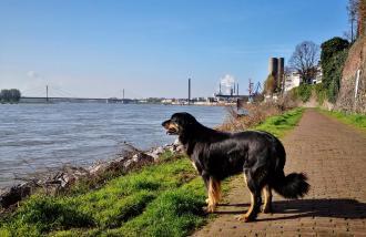 Doxi am Uferweg in Duisburg-Homberg