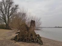 Wie viele Hochwasser dieser ufernahe Baum wohl schon erlebt hat?
