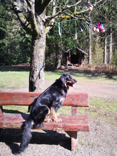 Hier hat jemand mitten in Wald an einer Wanderhütte Ostereier aufgehangen