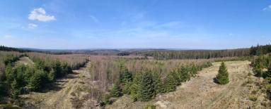 Panoramablick über den mittleren Teil des Hürtgenwaldes