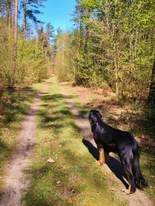 Bei schönstem Wetter geht es durch den Wald