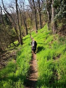 Auf schmalen Pfaden geht es durch die bewaldeten Moselhänge