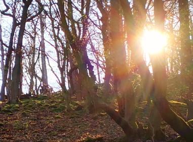 Oben im Wald beobachten uns drei Rehe, eines davon ist weiß