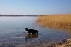 Doxi am Gemminer See, der den renaturierten Tagebau füllt