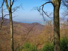Blick durch den Wald in Richtung Kelbra