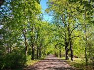 Die Kastanienbäume im Fridenspark sind bereits erblüht