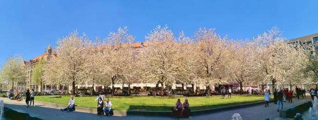Blühende Obstbäume auf der gut besuchten Thomaswiese vor der Thomaskirche