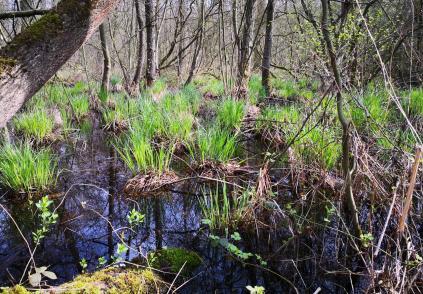 Feuchtgebiet im Rintgersbruch in Flussnähe