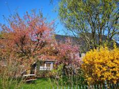 Schöner blühender Garten in Claashäuschen