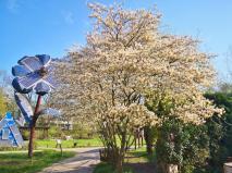 Blühende Bäume auf dem Gelände des NaturGutes Ophoven