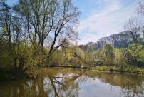 Wasserflächen auf dem Gelände des NaturGutes Ophoven