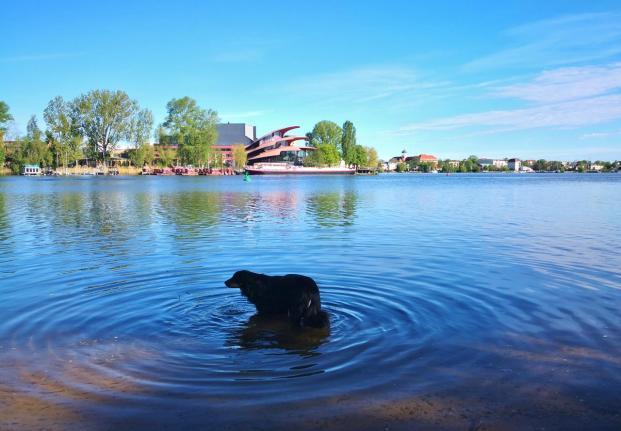 Doxi testet die Wasserqualität der Havel