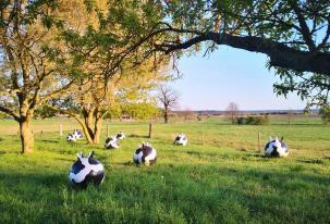 """""""Euter, die Spazierengehen"""" von Silke de Bolle aus dem Jahr 2010"""