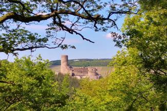 Blick durch den Wald auf die Burg Landshut
