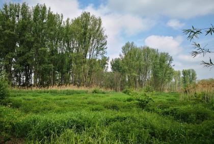 Feuchtlandschaft in den Urdenbacher Kämpen