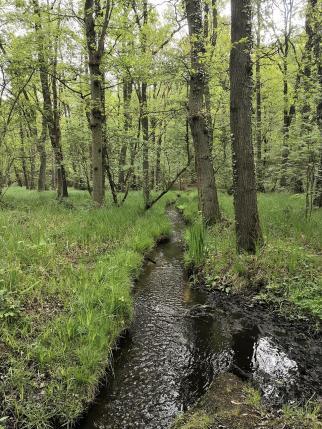 Zahlreiche Bäche durchziehen den Wald und entwässern in die Nette und darüber in die Krickenbecker Seen