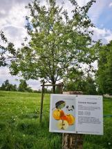 Obstbaum mit Sortentafel